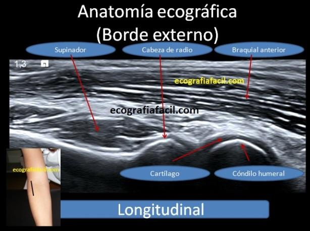 Anatomía – Ecografía Fácil